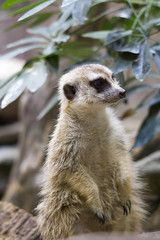 National Zoo  (1326) (smata2) Tags: zoo nationscapital smithsoniannationalzoo itsazoooutthere zoosofnorthamerica