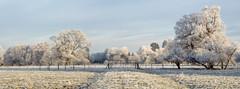 Frost on Barrington Hall (anthonyhepworth) Tags: winter hoarfrost barringtonhal