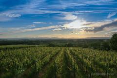 IMG_0308 (rainerbickel) Tags: sunset vineyard sonnenuntergang weinberg abendstimmung hecklingen malterdingen