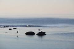 (Claire-L) Tags: mer libert calme paix sude ocan baltique