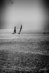 Rgate de Nice (armandbrignoli) Tags: noir et blanc bw bateau voilier nice rgate mer