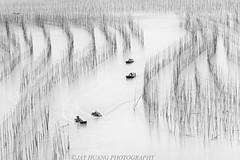 """S"" Bend, Xiapu, China (Jaykhuang) Tags: china morning abstract lines blackwhite pattern fujian fishingboat bamboopoles scurve sbend xiapu shajiangtown"