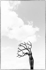 Daphne (glukorizon) Tags: art beeld beeldenaanzee blackandwhite boom cloud daphne denhaag frame irislerutte kader kunst kunstenaar lucht monochrome monochroom mythologie mythology nederland plant plastiek scheveningen sculpture sculptuur sky thehague tree vrouw wolk woman zuidholland zwartwit