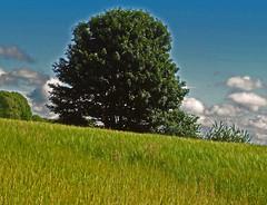 """""""The field"""" (Robin Bain) Tags: robinbain"""