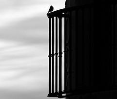 Gorrin enamorado (alfonsocarlospalencia) Tags: gorrin alczar de segovia balcn orgullo sobrado pensador infinito byn abismo cielo barrotes libertad paz smbolo tranquilidad reflexin mstica composicin historia detalle enamorado