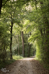 Way (judithrouge) Tags: way weg wald wood green grn calm ruhig tranquil future zukunft bend kurve sptsommer latesummer