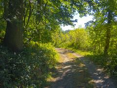 A Walk in Sunny Autumn (enneafive) Tags: gorsopleeuw borgloon walk nature green sun shadow