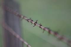 Lens test - bokeh - Anderson S.C. (DT's Photo Site - Anderson S.C.) Tags: bokeh rural farm country roads blur vintage canon andersonsc southernlife lens test 40d 70200mm f4is rusty barbed wire