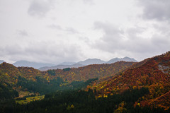 Yuzawa (masaaki miyara) Tags: mountain fall nature japan forest canon 50mm mt view oct sigma f16  5d niigata  fullframe  35   autmun yuzawa 2014   sigmalens   miyaramasaaki
