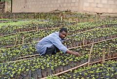 Kaffeepflanen# eine Bewegung vieler durch das Projekt starten#Plant a Seed