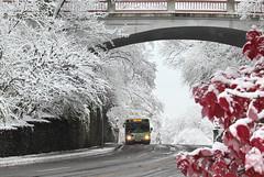 IMG_4024-2 (Wildlife Paparazzi) Tags: park snow cincinnati oh eden