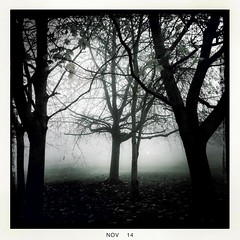 Fog_4 (soilse) Tags: cameraphone trees ireland light dublin leaves weather misty fog outdoors day gloomy branches foggy shapes silhouettes fallingleaves mobilephone gloom ucd app cellphonecamera iphone 2014 leavesfalling lightandshade blackeys lowvisibility universitycollegedublin ultrachrome gnarledbranches branchshapes iphonephoto iphonecamera iphoneapp iphonography foggyconditions hipstamaticapp hipstamaticcamera blackeysultrachrome november2014