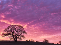 Tree (Maggie's Camera) Tags: pink sky tree sunrise dawn oak wottonunderedge 9december2014