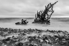 Zwischen Land und Meer (ulfkoepnick) Tags: rgen