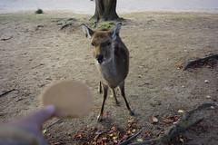 (ddsnet) Tags: travel animals japan sony resolution  nippon  nihon  ilc backpackers    7r  naraken   mirrorless   interchangeablelenscamera  7r ilce7r