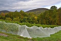 Chester Gap Cellars - Virginia (oscarpetefan) Tags: nikon nikkor ais d600 35mmf14 chestergapcellars oscarpetefan