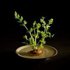 (Ash2ash) Tags: carrot ingredients plant stilllife      food