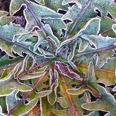 First Frost (ambo333) Tags: winter ice frozen frost bedfordshire freeze luton caddington