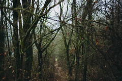Crosspoint (noemi.m) Tags: trees winter nature forest oak woods path branches
