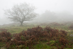 Looming Crags (Sue_Hutton) Tags: autumn mist leicestershire beaconhill charnwoodforest beaconhillcountrypark november2014