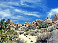 Vapor Tail over Joshua Tree NP 4-13 (inkknife_2000 (7 million views +)) Tags: usa landscape desert joshuatree skyandclouds vaportrail joshuatreenationalpark yuccaplant rockpiles dgrahamphoto