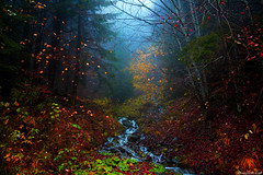Forest of Sweven (Phoenixfeather Light (Sweven)) Tags: autumn light fall misty forest dark stream dream foggy dreamy colourful magical dreamscape mythical sweven phoenixfeather phoenixfeatherxlight andreaeffulge phoenixfeatherlight