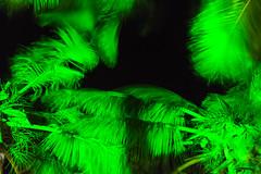 Namotu Island Fiji (micnical) Tags: ocean travel autumn sunset people seascape fall tourism beach water fiji guests clouds boats outdoors island photography coast surf waves tour surfer scenic may lifestyle surfing tourist resort pacificocean southpacific longboard beaches tropicalisland surfers surfboards oceans watersports tropics breakingwave coralreef joli nadi 2014 southernhemisphere actionsports cloudbreak namotu fji emptywaves wilkespassage freesurfing tosurf traveldescriptions peterjoliwilson anamotuscenic anamotuslideshow namotuislandresort 3rdweeknamotu20140517