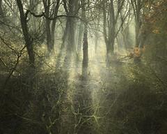 Edge Of The Ravine (Russ Barnes Photography) Tags: trees winter mist forest nikon warwickshire brandonmarsh russbarnes d800e zeiss100mmf2zf2