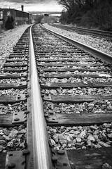4of365 (bifurcationpoint) Tags: blackandwhite lines traintracks day4 railroads railroadtracks day4365 365the2015edition 3652015 4jan15