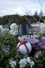 20141207 Denpark 4 (BONGURI) Tags: christmas xmas snowman nikon df cosina  aichi  anjo  denpark     voigtlandercolorskopar28mmf28sliiaspherical
