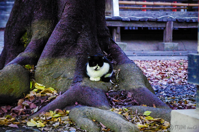 Today's Cat@2014-12-15