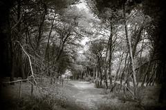 Mysterious Road (Moretti Matteo) Tags: road sea summer italy sun fall texture mystery strada italia mare august unknown sole terra puglia gemelle orso stradina 2014 battuta sorelle