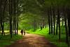 Forest Walkers (Yudho Wiratomo) Tags: morning travel holiday beach forest canon east pantai pagi kalimantan balikpapan kaltim lamaru eos60d