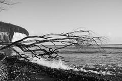 Walking along the beach (sacipere) Tags: praia beach strand debris wave balticsea rgen ostsee kreidefelsen chalkcliffs sacipere