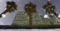 Palmeras Palm trees (Raul Jaso) Tags: alberi reflections mexico arbol arboles palmeras palm palmtrees palmtree reflejo albero palmera ciudaddemexico reflejos refletion imagenreflejada dmcfh8 panasonicdmcfh8