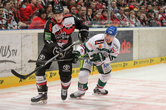 """DEL15 Kšlner Haie vs. Augsburg Panthers • <a style=""""font-size:0.8em;"""" href=""""http://www.flickr.com/photos/64442770@N03/16114716608/"""" target=""""_blank"""">View on Flickr</a>"""
