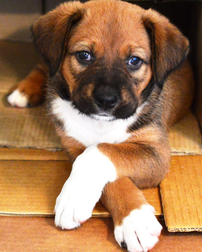 The little dog RAYO - El pequeño Rayo.