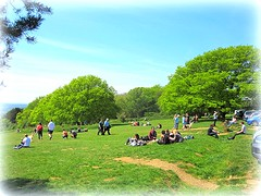 Newlands  Corner being enjoyed  by  EVERYONE on a Sunday (May 8th 2016) (John(cardwellpix)) Tags: by corner being sunday may everyone 8th newlands enjoyed 2016