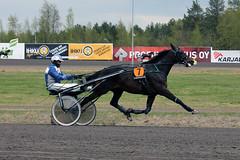 IMG_2463 (lovelymelancholy) Tags: horses horse hevoset hevonen horseraces ravit imrautio ravihevonen oulunravirata