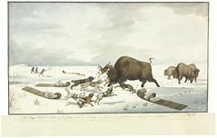The dogs discover a herd of buffalo / Les chiens reprent un troupeau de bisons (BiblioArchives / LibraryArchives) Tags: winter podcast canada men art dogs painting buffalo aquarelle hiver rifle lac peinture watercolour exploration herd sleds homme settlement hunters chiens bac bisons balado 1822 fusil chasseurs troupeau colonisation traneaux libraryandarchivescanada bibliothqueetarchivescanada peterrindisbacher