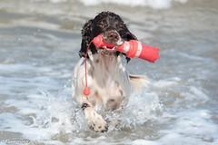 FAN_5612.jpg (Flemming Andersen) Tags: dogs water denmark seaside spring hund dk hurup nykbingmors northdenmarkregion
