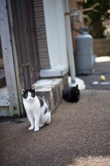 (23fumi) Tags: street cat nikon dof bokeh cosina voigtlander  58mm nokton  d600    voigtlandernokton58mmf14slii  stphotographia