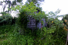 Still Standing (Mary America) Tags: light usa abandoned ancient kentucky country homestead manandnature kentuckyfarm
