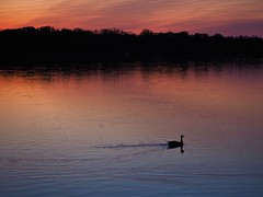 Evening Commute (tim.perdue) Tags: columbus sunset ohio sky reflection bird water silhouette clouds river landscape zoo evening twilight dusk goose reservoir commute powell ripples waterfowl scioto oshaughnessey