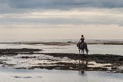 going (Fjola Dogg) Tags: people horse nature swimming canon outdoors is iceland spring europe pad s sland nttra hest sleipnir flk stokkseyri icelandichorse hestur southiceland hross rborg theicelandichorse md slenskihesturinn evrpa rnesssla sundrei fjoladogg fjladgg canonpowershotg7x canong7x padfjoladogg mdfjladgg
