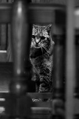 A cat under the table / Un chat sous la table (carmelo.migliore) Tags: wood white black cat table chair chat chaise
