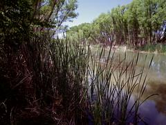 IMGP3619 (EllenJo) Tags: pentax cottonwoodarizona 2016 june19 jailtrail 86326 ellenjo ellenjoroberts pentaxqs1