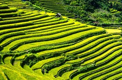 Mu Cang Chai, Vietnam (journey.symphonyoflove.net) Tags: trip travel vacation holiday travelling tourism asia tour flight vietnam destination traveling riceterrace destinations travelpicture beautifulplace traveltip flightticket touristdestinations travelinformation cheapflight mucangchai travelinginasia amazingdestinations cheapflighttovietnam beautifuldestinations asiancountries tipsforflight cheapestflighttovietnam tipfortravel
