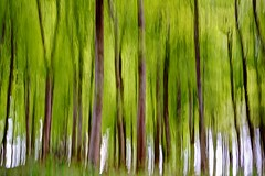 Green Piece - ICM (johnlunt) Tags: camera wood uk england brown abstract motion blur color colour tree green art nature vertical john landscape outdoors leaf spring movement woods nikon cornwall forrest britain outdoor vibrant f14 creative may 85mm vivid blurred fresh foliage impressionism colourful trunks truro impressionist icm freshness lunt intentional ladock d810 johnlunt
