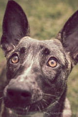Food? Where? (doranyiro) Tags: portrait dog pet cute nature beautiful beauty animal contrast canon puppy concentration mix eyes funny outdoor ears dogwalk dogportrait dogshelter canon40d